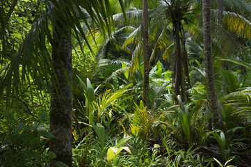 Plakat Lush Tropical Jungle Rainforest Background