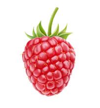 Isolated Berry. One Fresh Rasp...