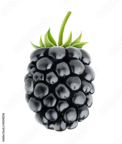 Isolated berry. One fresh blackberry fruit with stem isolated on white background