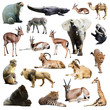 Set of african animals. Isolated on white