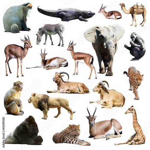 Fotobehang Leeuw Set of african animals. Isolated on white
