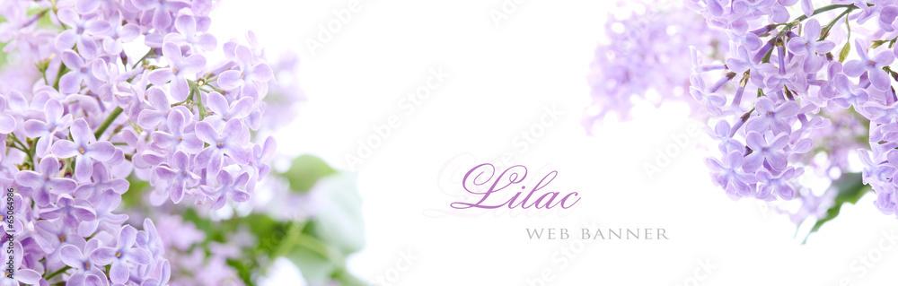 Fototapeta Lilac flowers