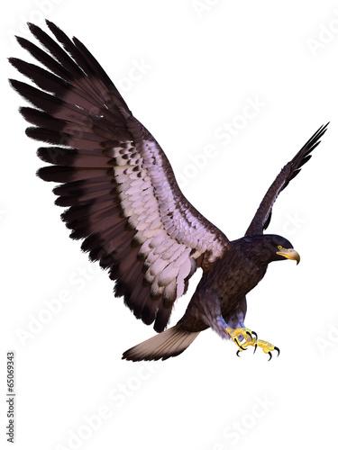 In de dag Eagle young eagle