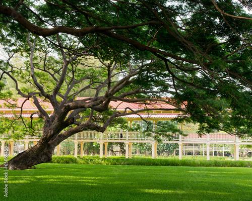 In de dag Palermo Big tree