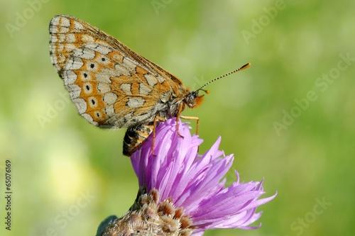 Fotografie, Obraz  le réveil d'un papillon