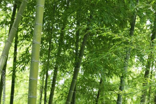 Keuken foto achterwand Bamboo The image of beautiful nature