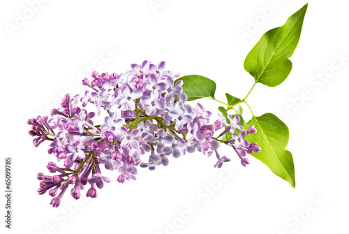 Recess Fitting Lilac lilac and leaves