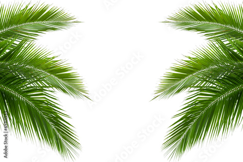 La pose en embrasure Palmier leaves of coconut tree isolated on white background