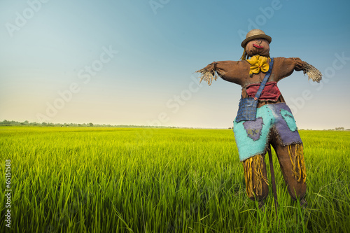 Fototapeta scarecrow in the rice field