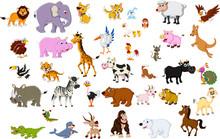 Big Animal Set For You Design