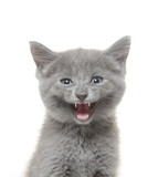 Cute kitten with mouth open