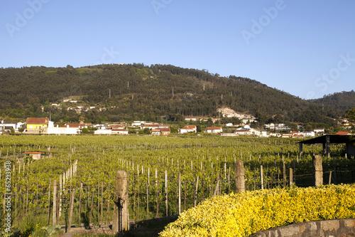 Fotografie, Obraz  Vineyards in the Minho Region, Portugal
