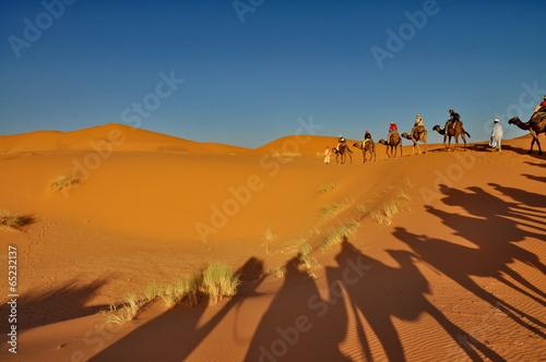 Spoed Fotobehang Kameel Shadow of Camels in Merzouga desert, Morocco