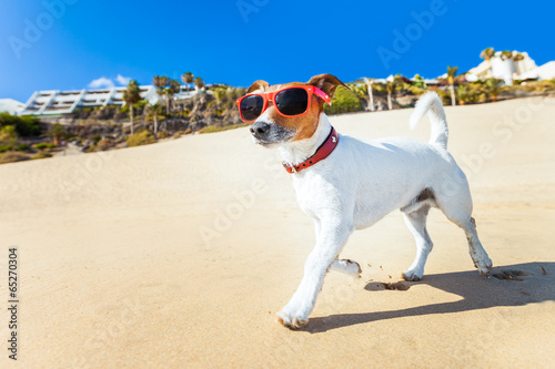 dog running at beach