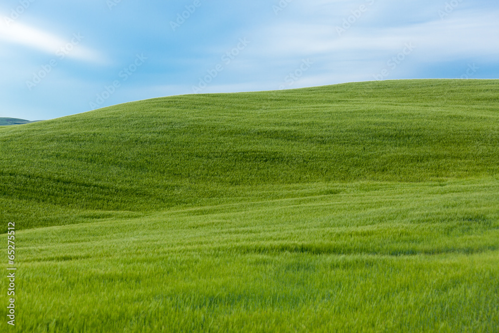 Fototapety, obrazy: Typical Tuscany landscape, Italy