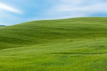 Typical Tuscany Landscape, Italy