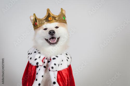Láminas  akita royal