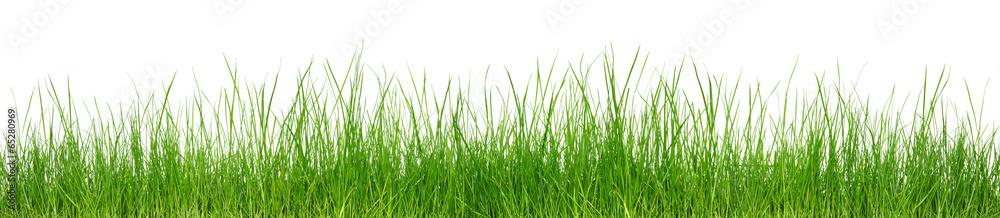 Fototapeta Green grass on white background