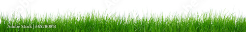 Photo Stands Grass Green grass on white background