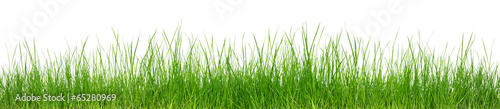 Photo sur Toile Herbe Green grass on white background