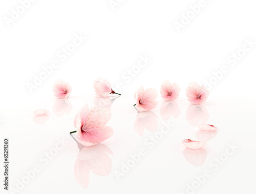 pink flowers isolated on white Wall mural