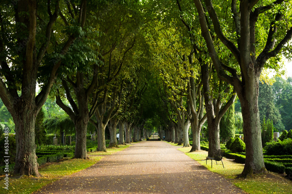 Fototapeta Alley of trees on the graveyard, Lund, Sweden