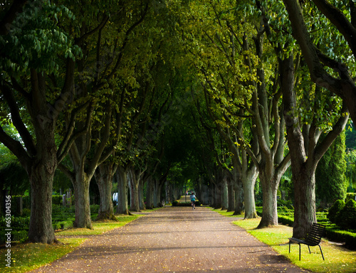 Alley of trees on the graveyard, Lund, Sweden #65304356