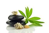 Fototapeta Kamienie - Kamienie bazaltowe z liściem i muszlami