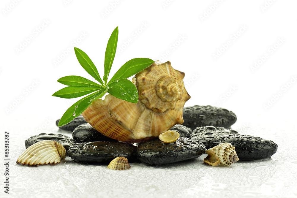 Fototapeta Kamienie bazaltowe z liściem i muszlami