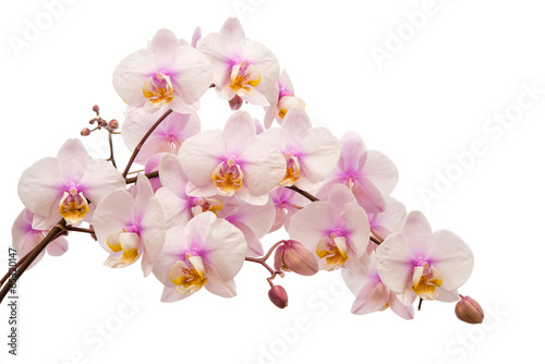Montage in der Fensternische Orchideen Orchideenrispe