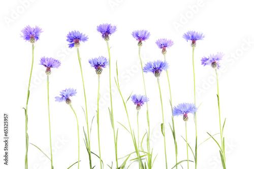 Spoed Foto op Canvas Iris Beautiful cornflowers isolated on white
