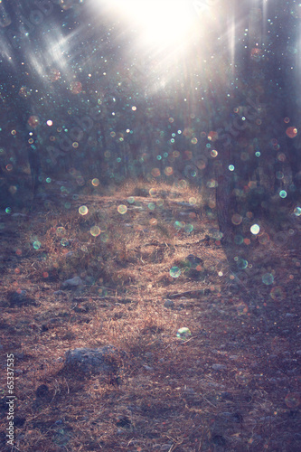 forest and light burst. magical concept