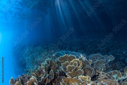 Coral Reef and Light