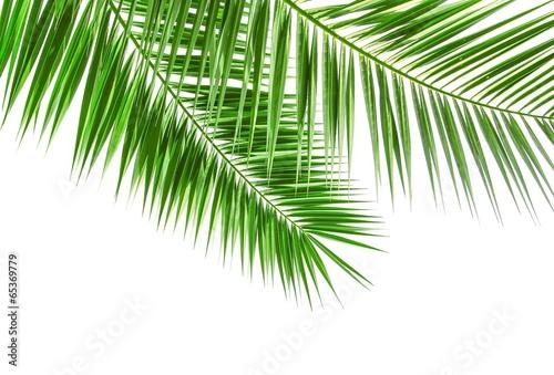 Papiers peints Palmier Palmwedel isoliert auf weiß