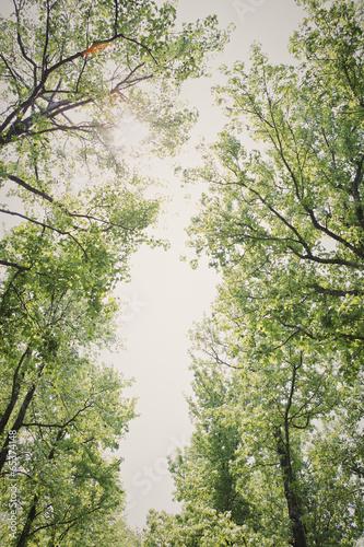 korony-drzew