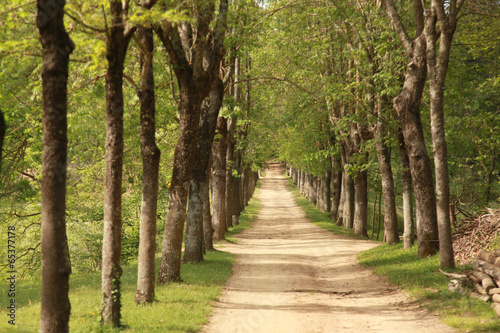 Aluminium Prints Road in forest camino