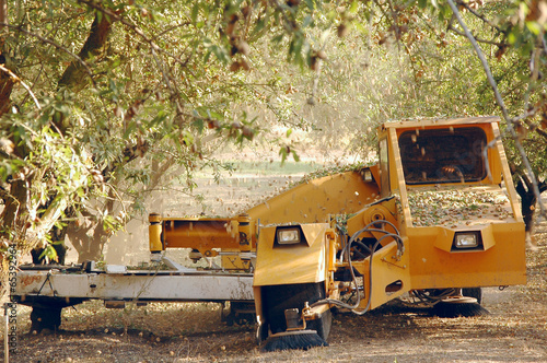 Almond at the harvest time. California, USA Wallpaper Mural