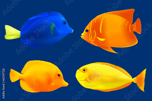 Fotografie, Tablou  Set of tropical fish. Vector illustration