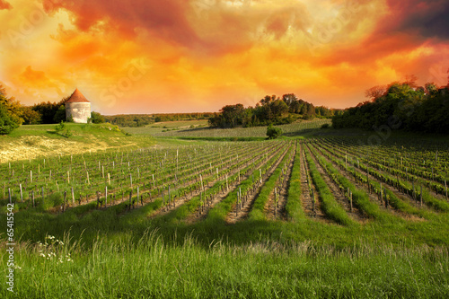 Foto op Plexiglas Zuid Afrika Vineyards of Saint Emilion, Bordeaux Vineyards