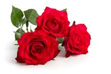 Drei Liegende Rote Rosen