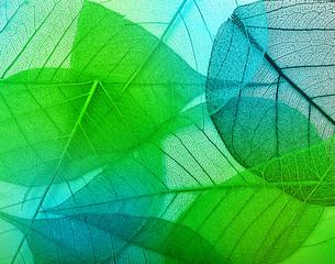 Panel Szklany Podświetlane Do przedpokoju Macro leaves