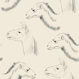wielbłąd i lama - 65457719