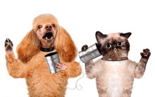 Cat With A Dog On The Phone Wi...