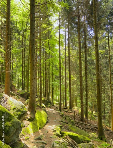 szlak-turystyczny-w-czarnym-lesie-01