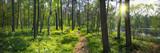 Fototapeta Forest - Panoramiczny obraz nad brzegiem jeziora