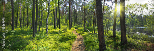 Printed kitchen splashbacks Road in forest Panoramiczny obraz nad brzegiem jeziora