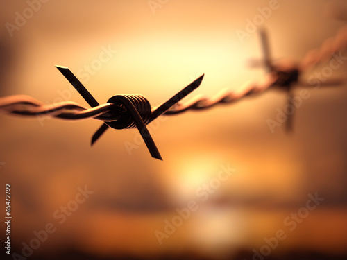 Barbed wire with Depth Of Field Fototapet