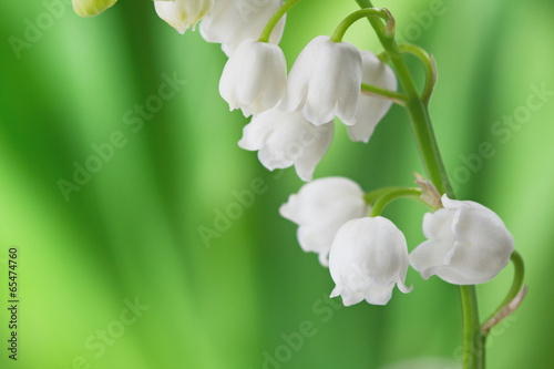 Poster Muguet de mai Lily of the Valley on light green background.