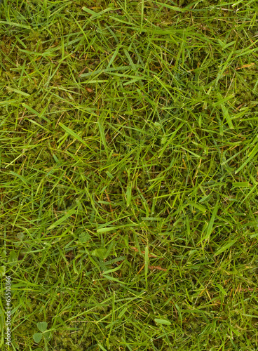 Cadres-photo bureau Herbe Lawn with grass and moss