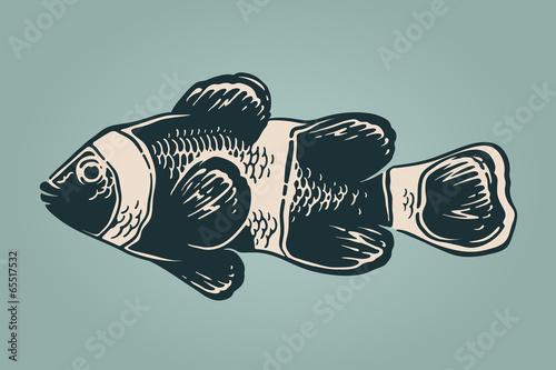 Obraz na płótnie Vector vintage illustration of clownfish